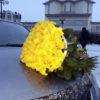 троянди Івано-Франківськ