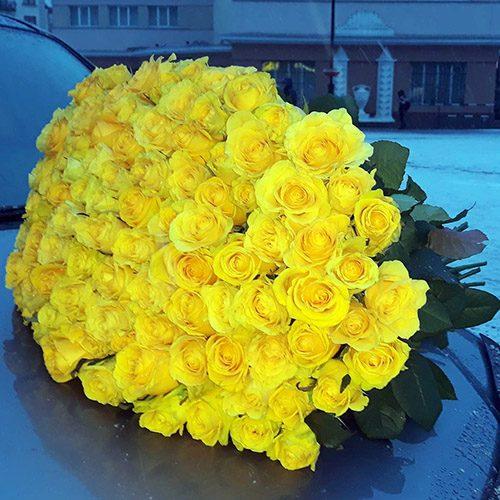 101 жовта роза фото