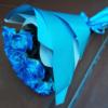 Фото товару 17 синіх троянд (фарбованих)