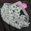 Фото товару 11 хризантем