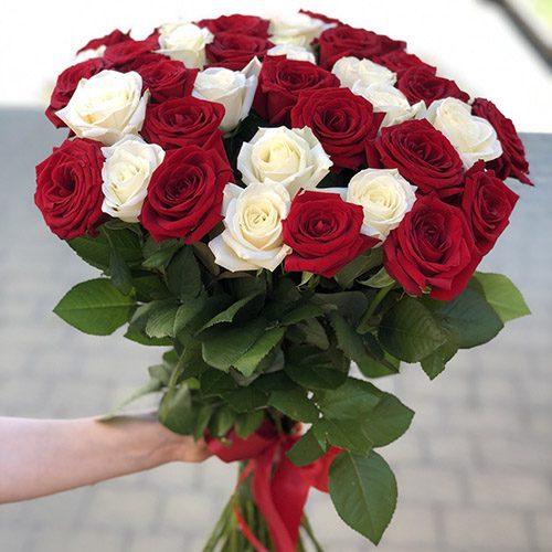 Фото товару 33 троянди червоні та білі