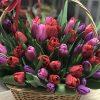 букет 51 тюльпан у кошику
