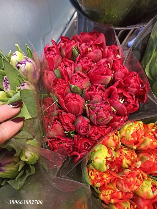 тюльпани в Івано-Франківську фото