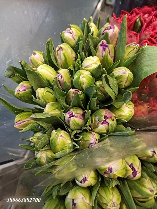 тюльпани від магазину квітів