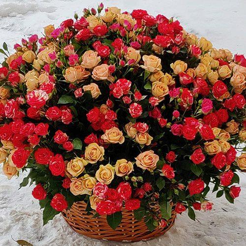101 кущова троянда в кошику фото