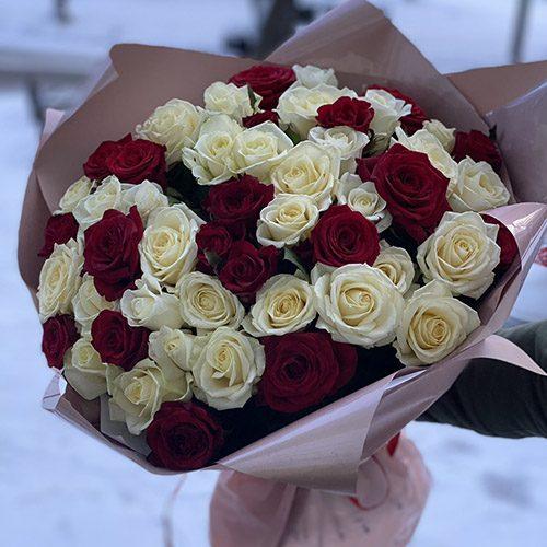 51 червоно-біла троянда фото