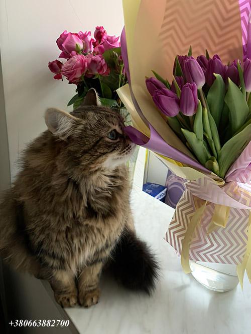 тюльпани та кущові троянди в ІФ доставка