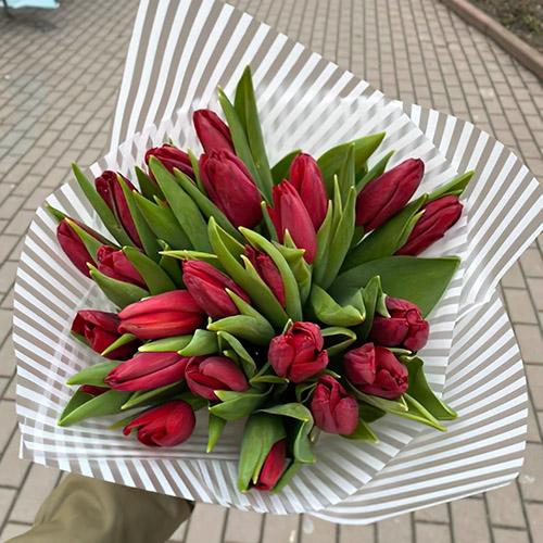 букет тюльпанів фото