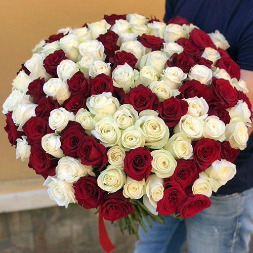 101 червона та біла троянда фото