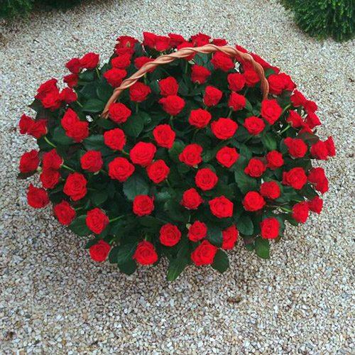 букет 101 червона троянда в кошику