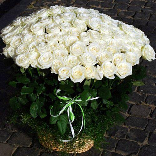 101 біла троянда в кошику фото