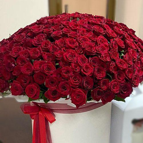 301 червона троянда в коробці фото